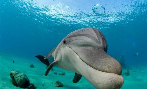 Dolphin-boy