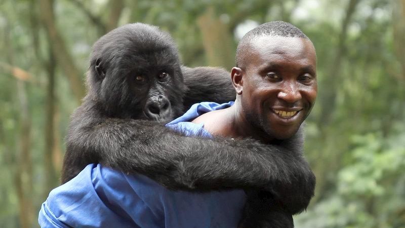 Orlando von Einsiedel, Virunga / Pobjednik u međunarodnoj konkurenciji