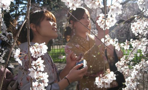 Tsunami_and_the_cherry_blossom_filmstill1_300dpi