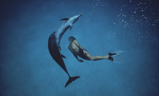 Dolphin-boy%25202