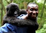 Virunga_andre_with_gorilla_virunga_national_park